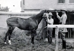 WWII Stallion Nicknamed 'The Sikh' Walked Back to Britain from Russia