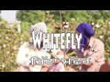 <b>A Short Movie: Whitefly (...</b>